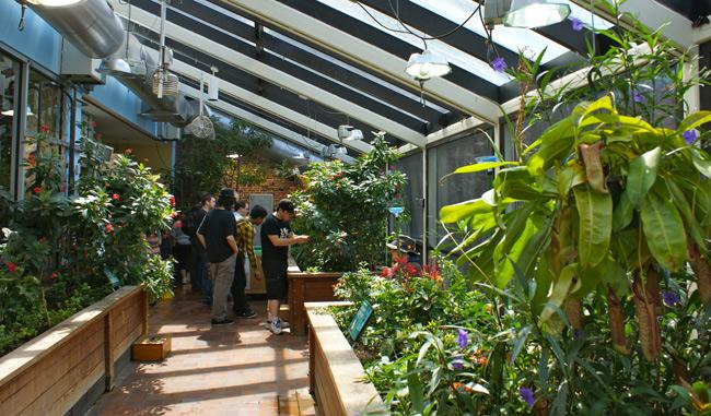 Delicieux Museum Of Science Erfly Garden Best Idea